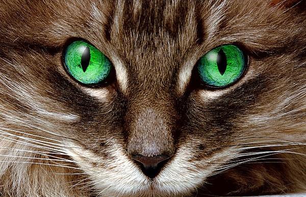 gatto-impatto-zero