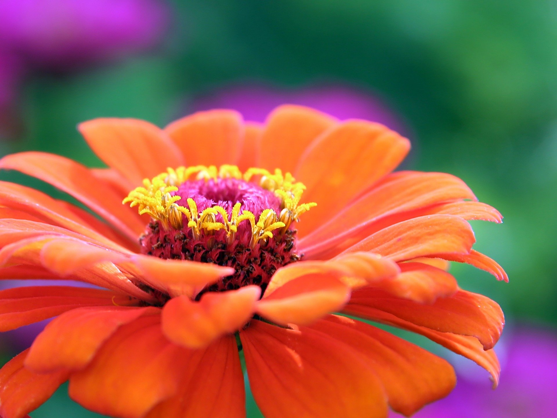 Piante Adatte A Camera Da Letto : Purificare l aria con le piante casa