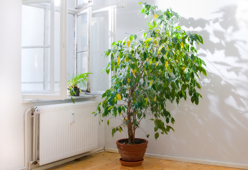 Le migliori piante per purificare l 39 aria in casa secondo for Piante da interno alte