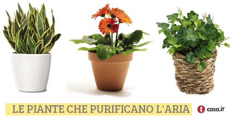 Purificare l aria con le piante - Piante che purificano l aria in casa ...