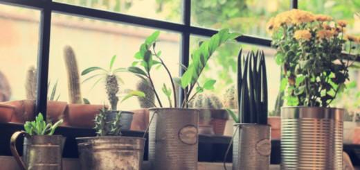 purificare_aria_con_le_piante