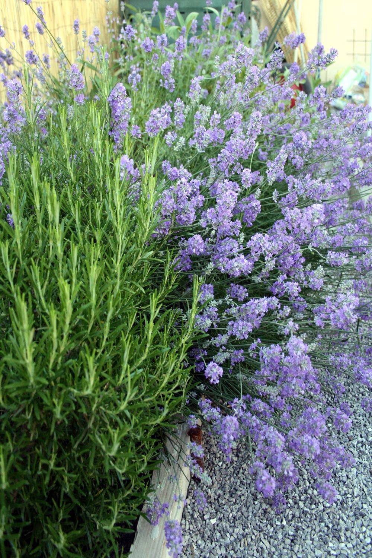 Terrazzi In Fiore Le Foto Delle Vincitrici Casait
