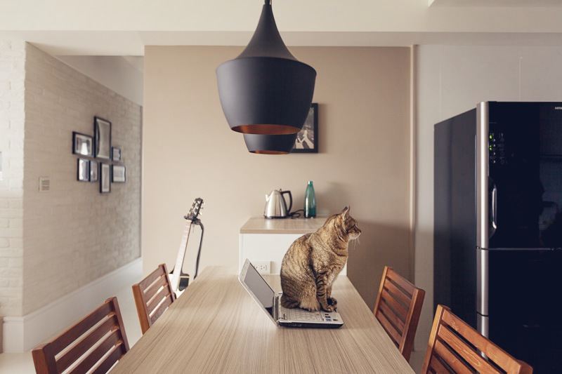 casa_gatto3
