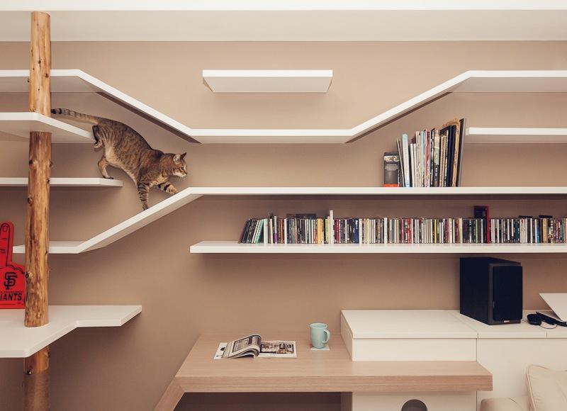 casa_gatto6
