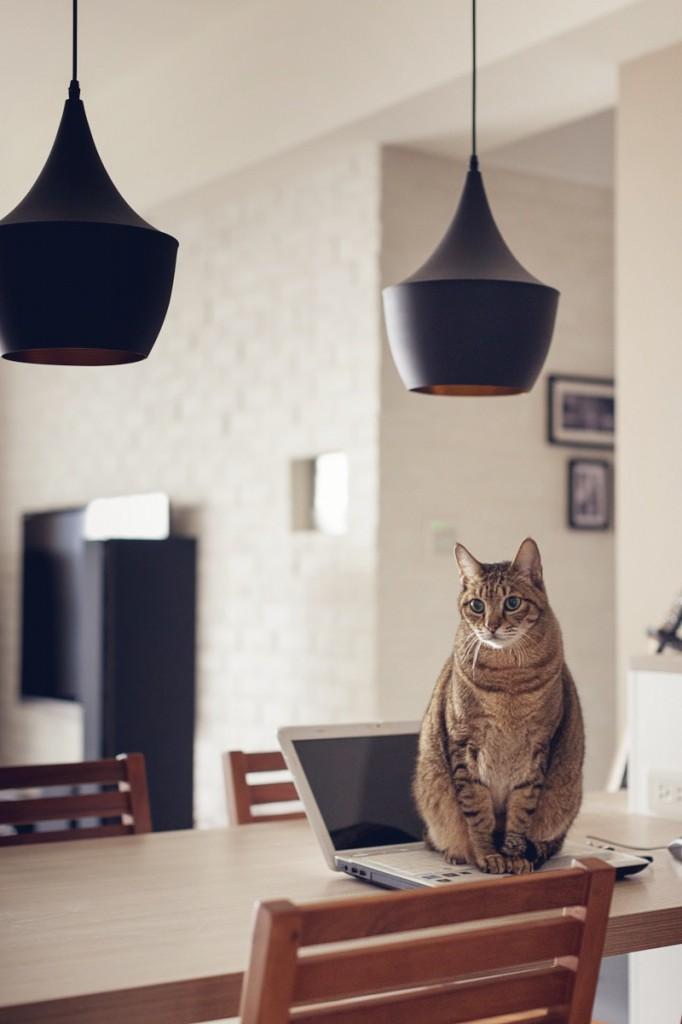 casa_gatto7