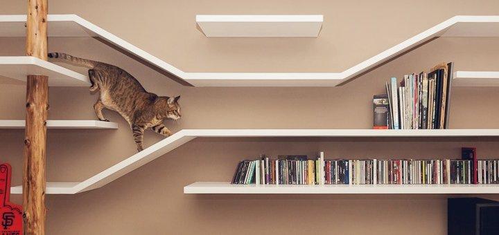 Adottare un gatto la casa a misura di felino - Gatto defeca per casa ...