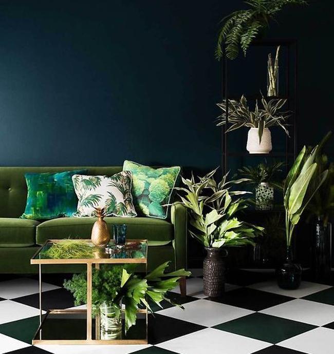 colori scuri in casa e piante