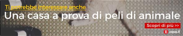peli cane in casa