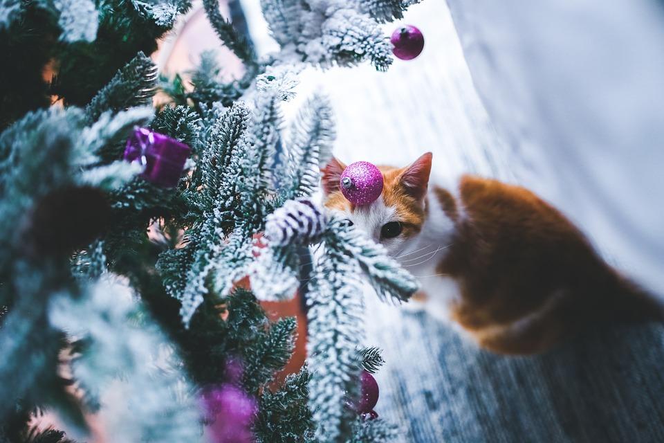 a prova di gatti