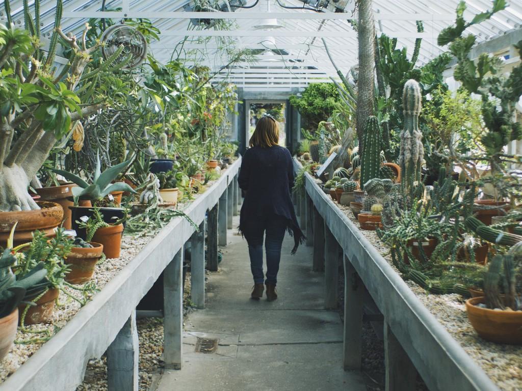 piante-grasse-01