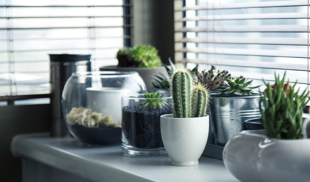 angolo green: le piante grasse in casa - casa.it
