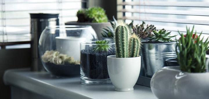 Angolo green le piante grasse in casa for Tutte le piante grasse
