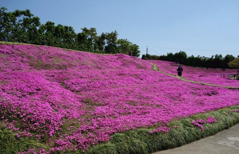giardino fiorito2