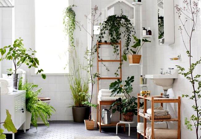 Le piante finte in casa solo se - Piante in bagno ...