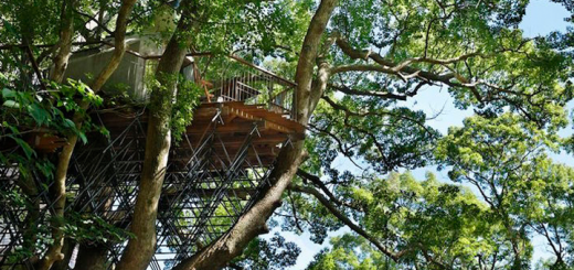 casa-albero-kukushu_cover
