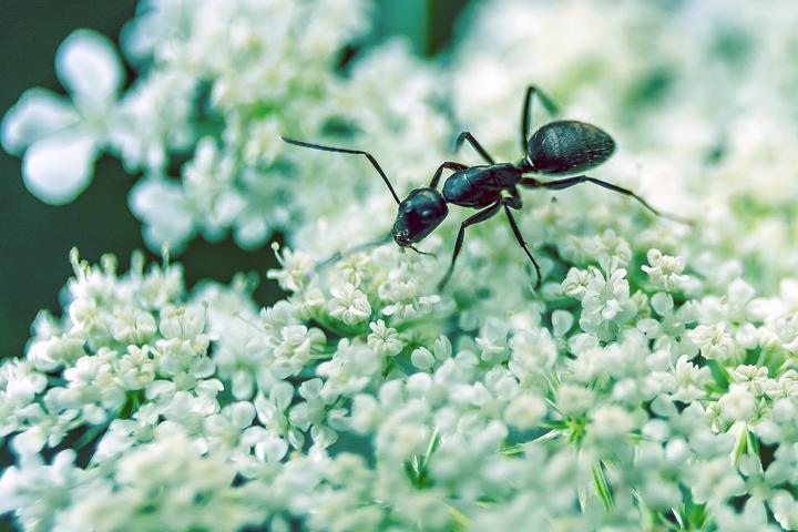 combattere-formiche_06