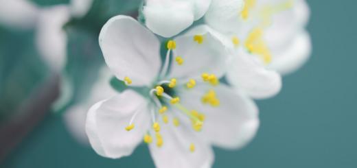 fiori balcone primavera