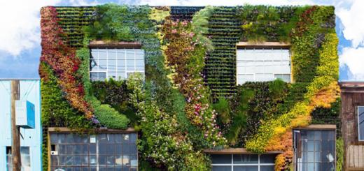 muro-verde_cover