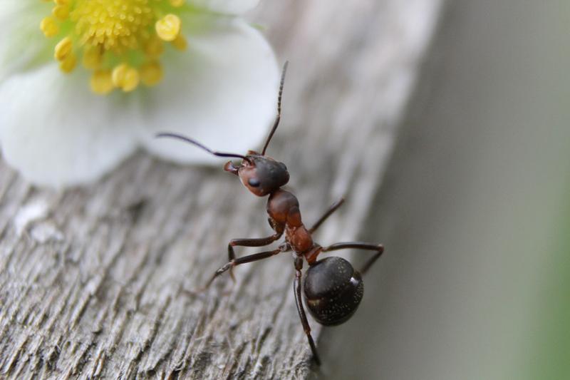 I mille usi dell 39 aceto in casa - Come allontanare le formiche da casa ...
