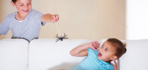 eliminare ragni in casa