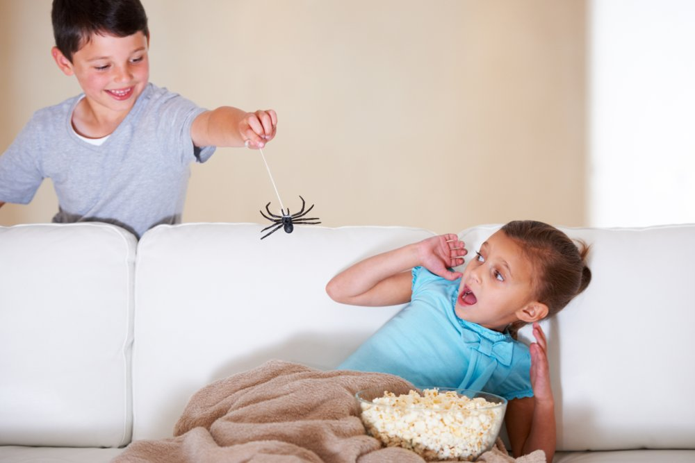 ragni in casa