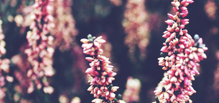 piante-balcone-inverno_cover