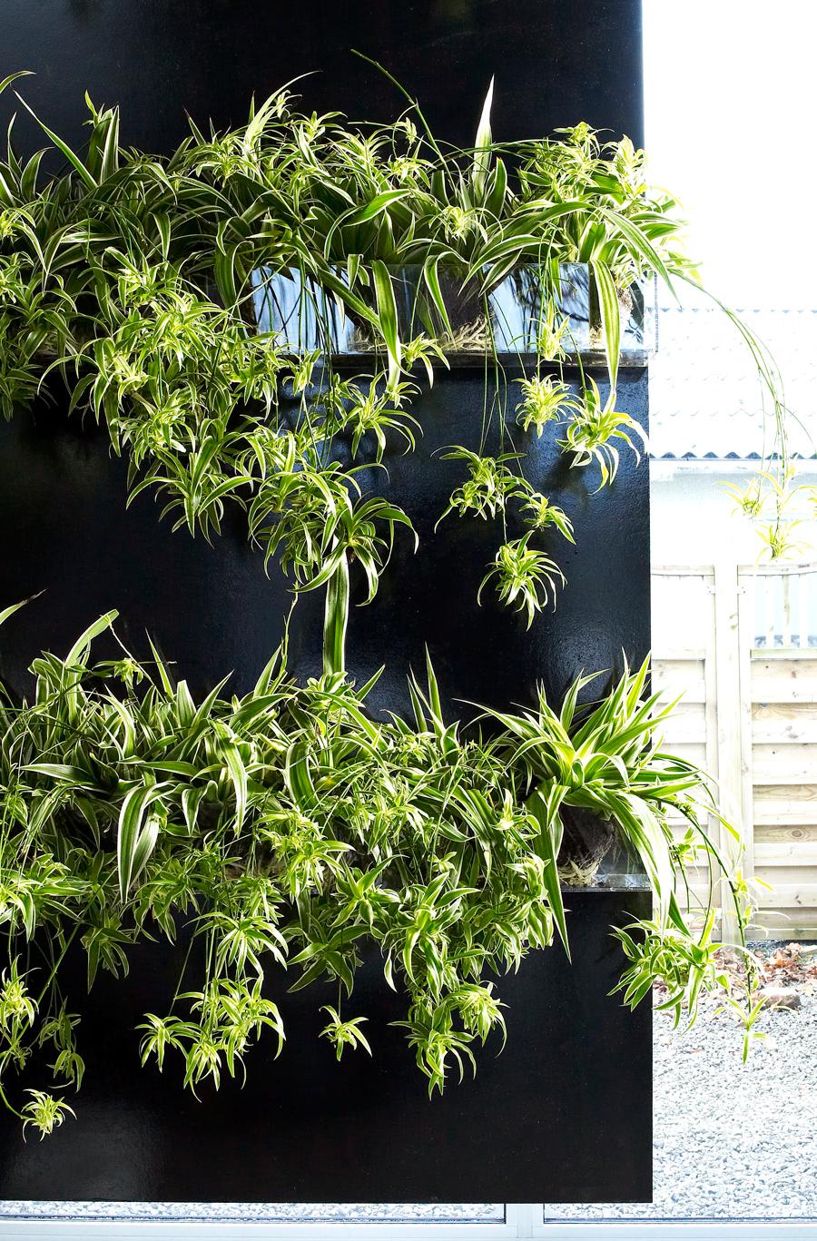 Piante Strane Da Appartamento non solo pothos: le piante facili da appartamento - casa.it