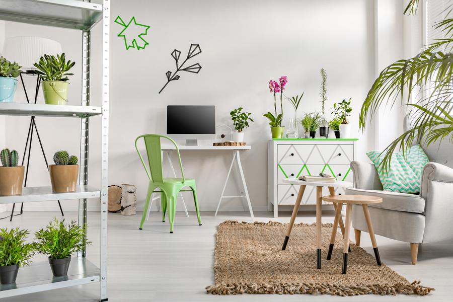 piante-facili-appartamento_00