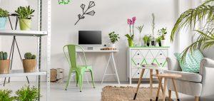 Le piante facili da appartamento
