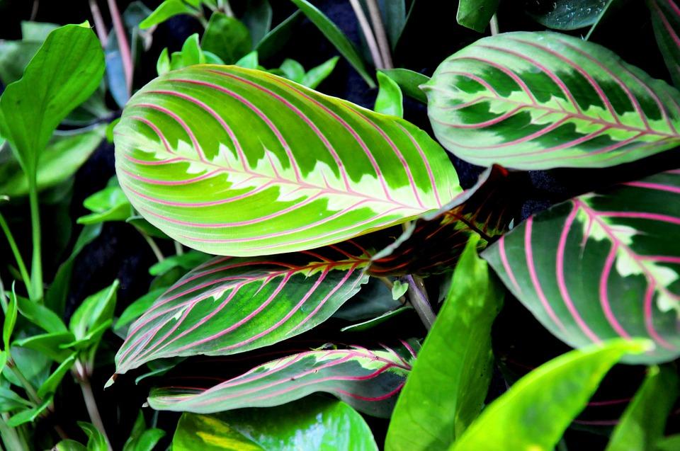 Come purificare l aria in camera da letto con 3 piante - Piante in camera ...